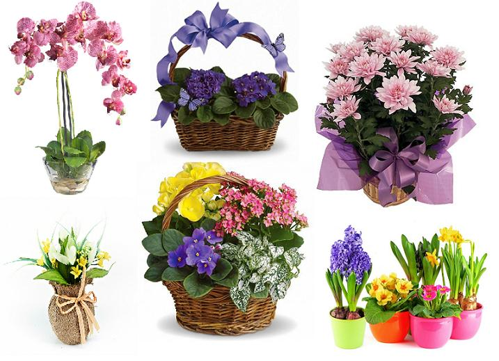 Картинки на k цветы природа